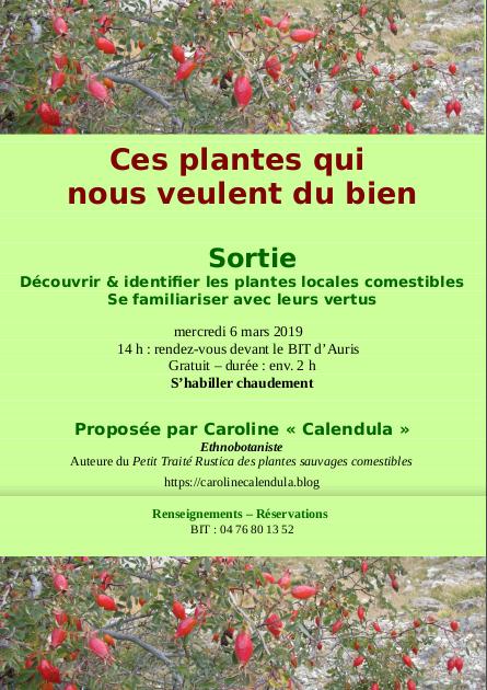 Sortie : découvrir & identifier les plantes locales comestibles ; se familiariser avec leurs vertus