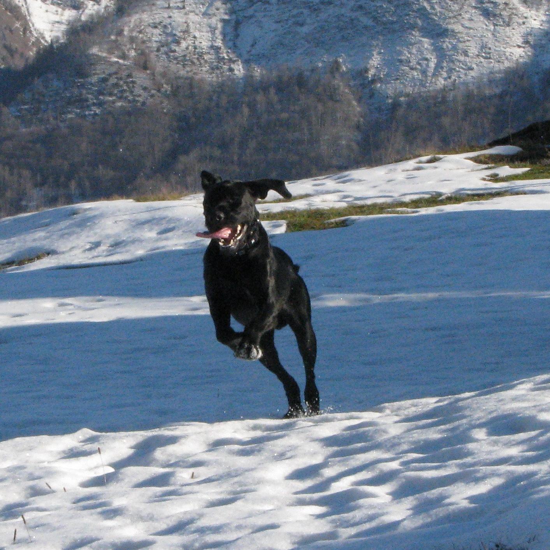 Diksy en pleine course, dans la neige