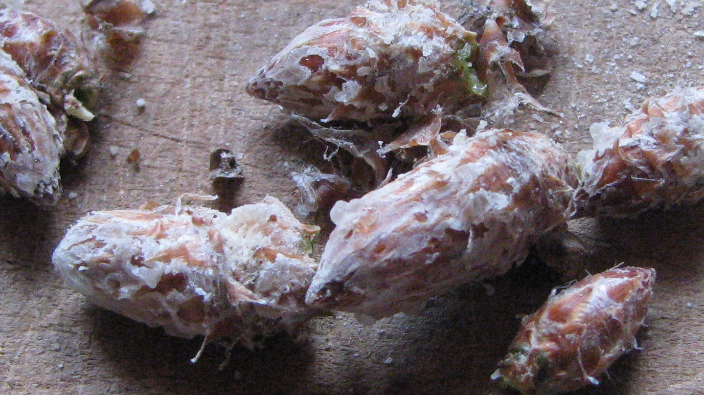 Bourgeons de pin sylvestre sur la planche à découper
