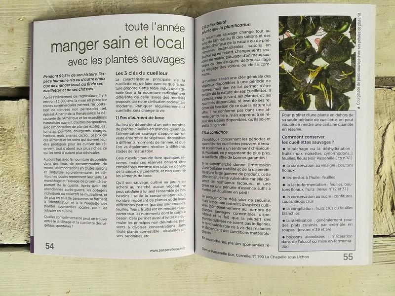 Article : manger sain et local toute l'année, avec les plantes sauvages