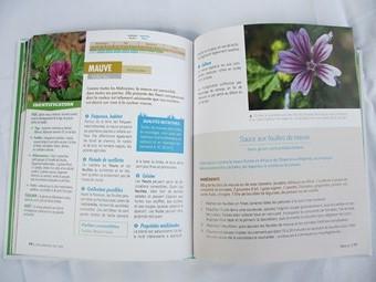 Un exemple de double page du Petit Traité Rustica des Plantes Sauvages Comestibles (Caroline Calendula, Christophe Monplaisir, Laurent Stubbe)