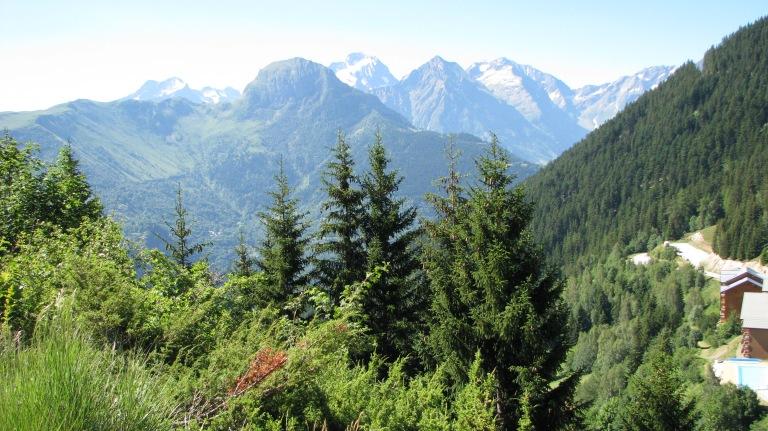 Les Conifères en montagne : épicéa, sapin, mélèzes, pins...