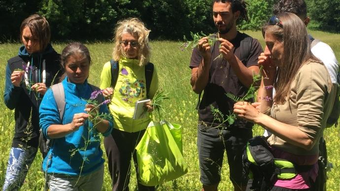 Les stagiaires apprennent à identifier des plantes sauvages comestibles