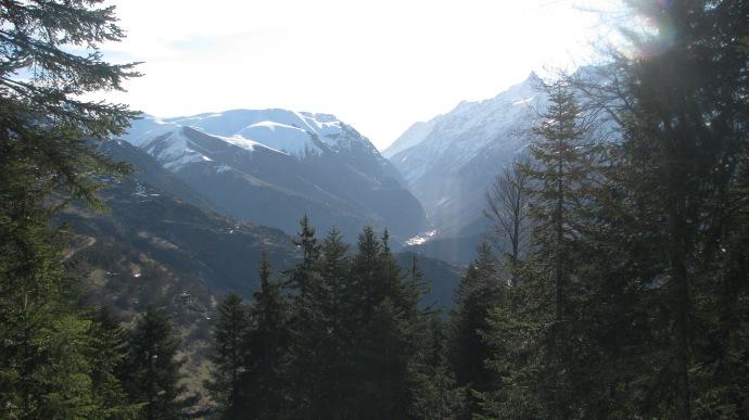 Paysage de montagne, avec des conifères au premier plan