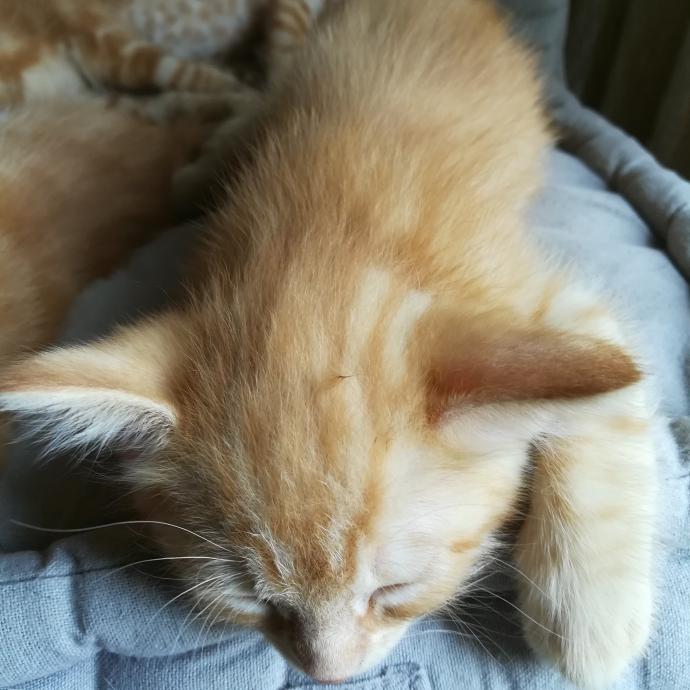 Un chaton de quelques jours !