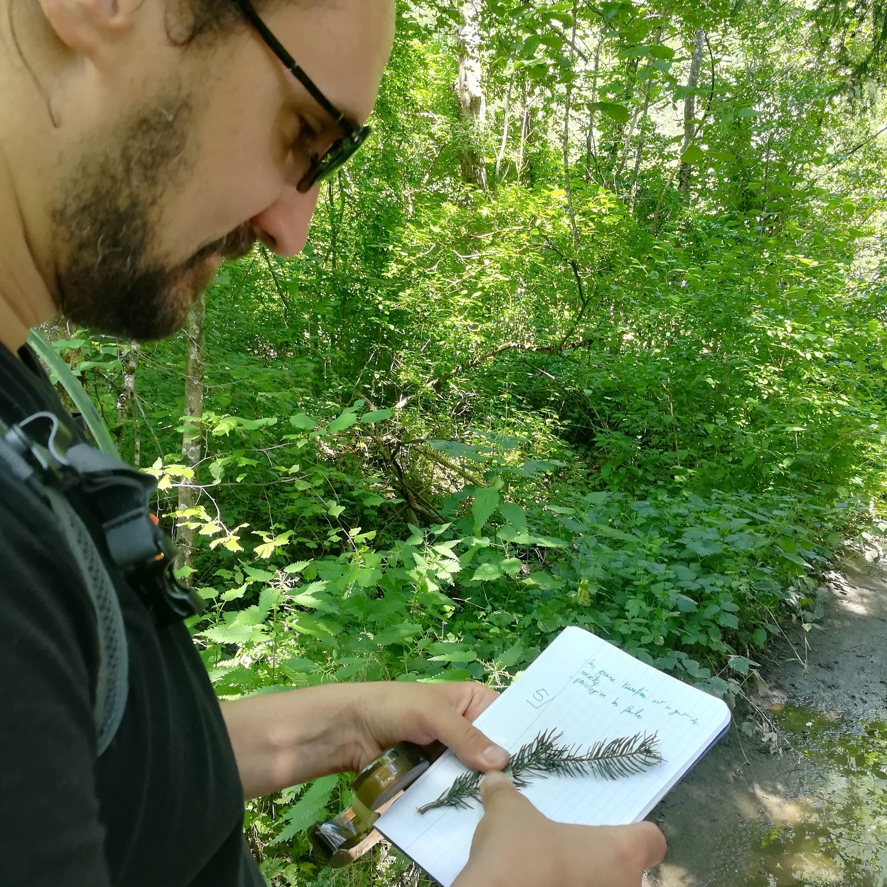 En stage, l'observation des plantes permet une identification précise